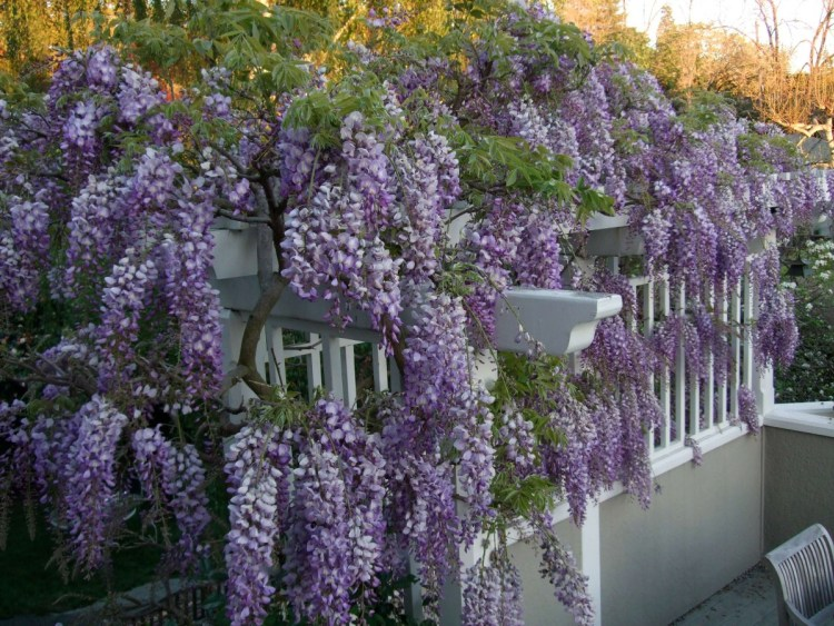 Natural_Privacy_Fence_Ideas