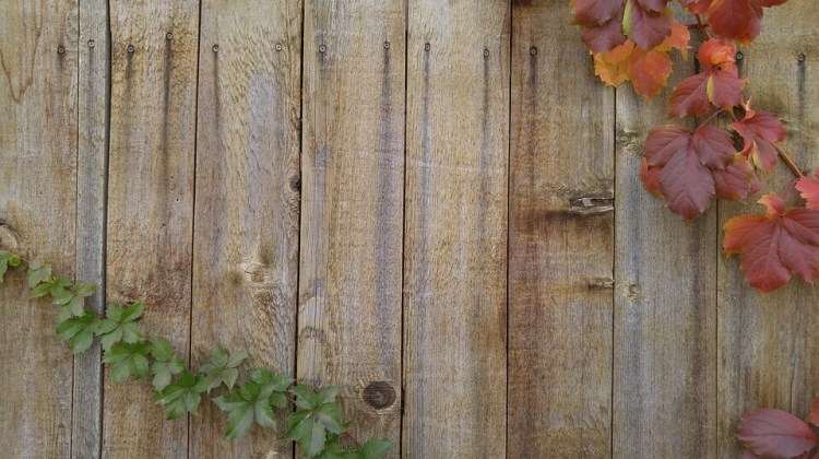 Wood_Fence_Vines