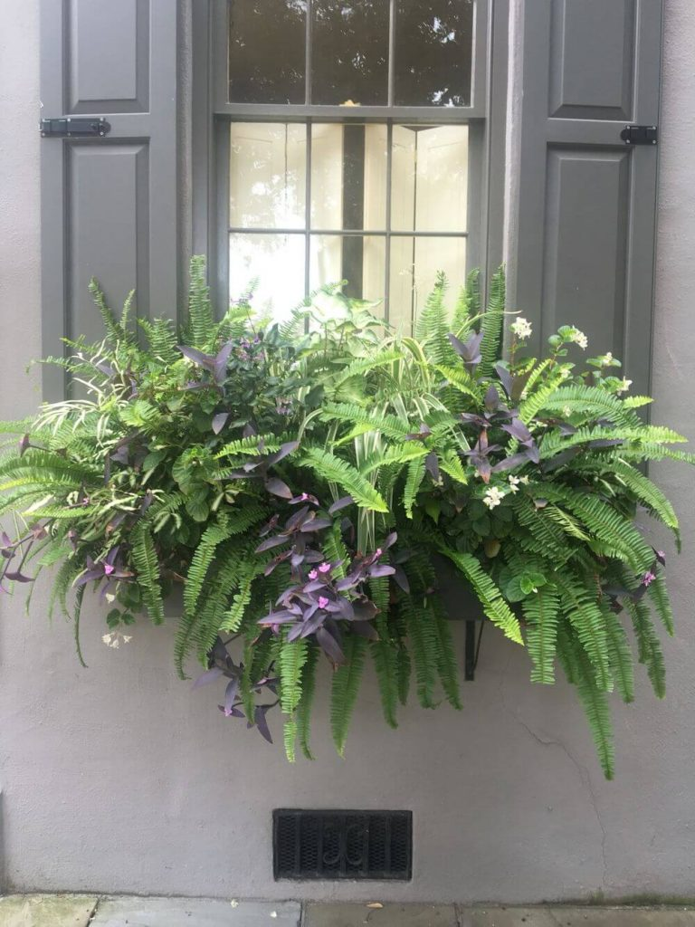 window box ideas for shade