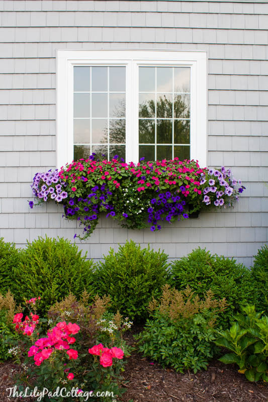 window box ideas for summer