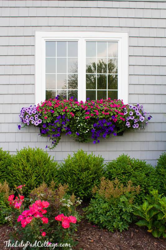 window box ideas for summer