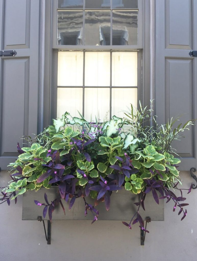 window box ideas shade