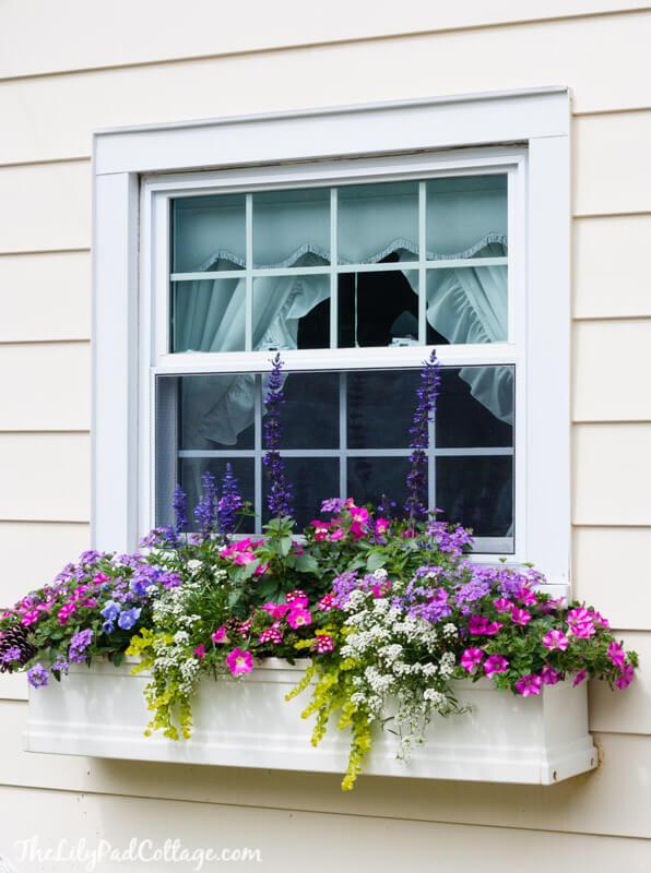 window box planters ideas