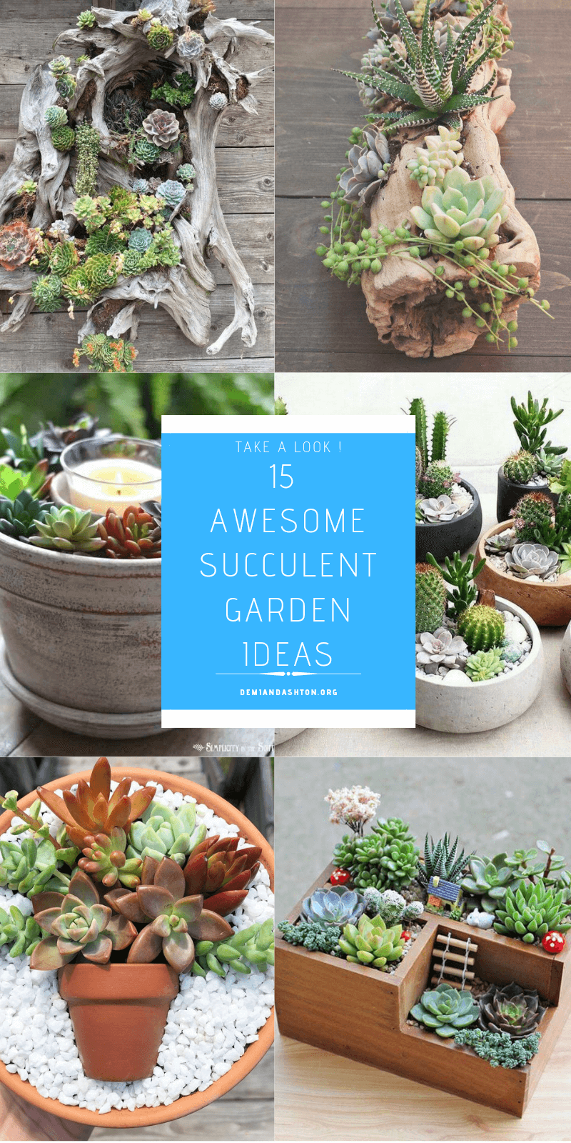 15 Awesome Succulent Garden Ideas For Uniqueness In Your Garden