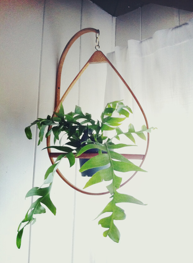 hanging planters indoor
