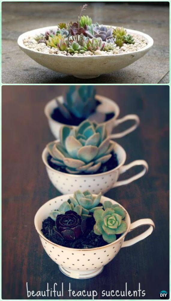 mini succulent garden ideas