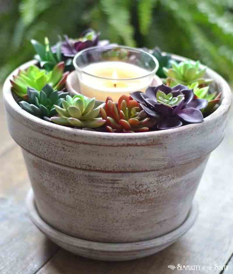 miniature succulent garden ideas