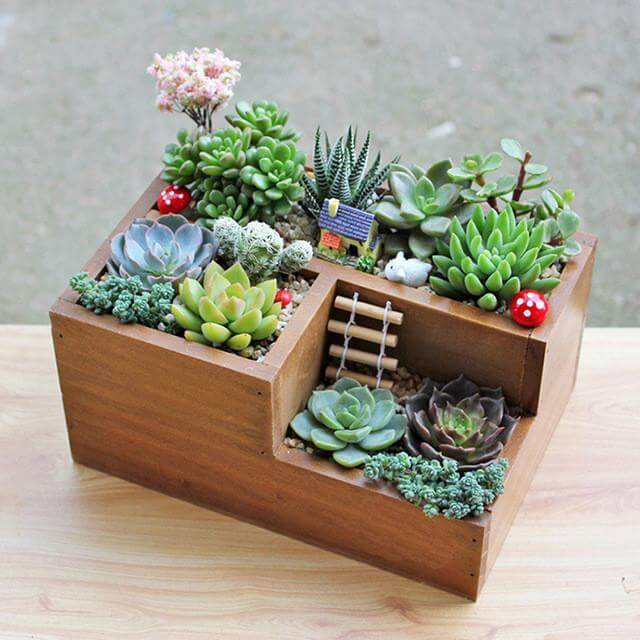 small succulent container garden ideas