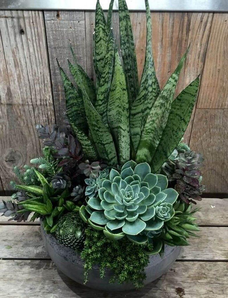 succulent dish garden ideas