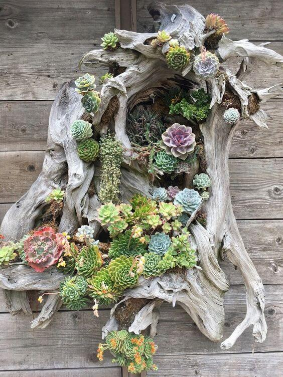 succulent garden design ideas