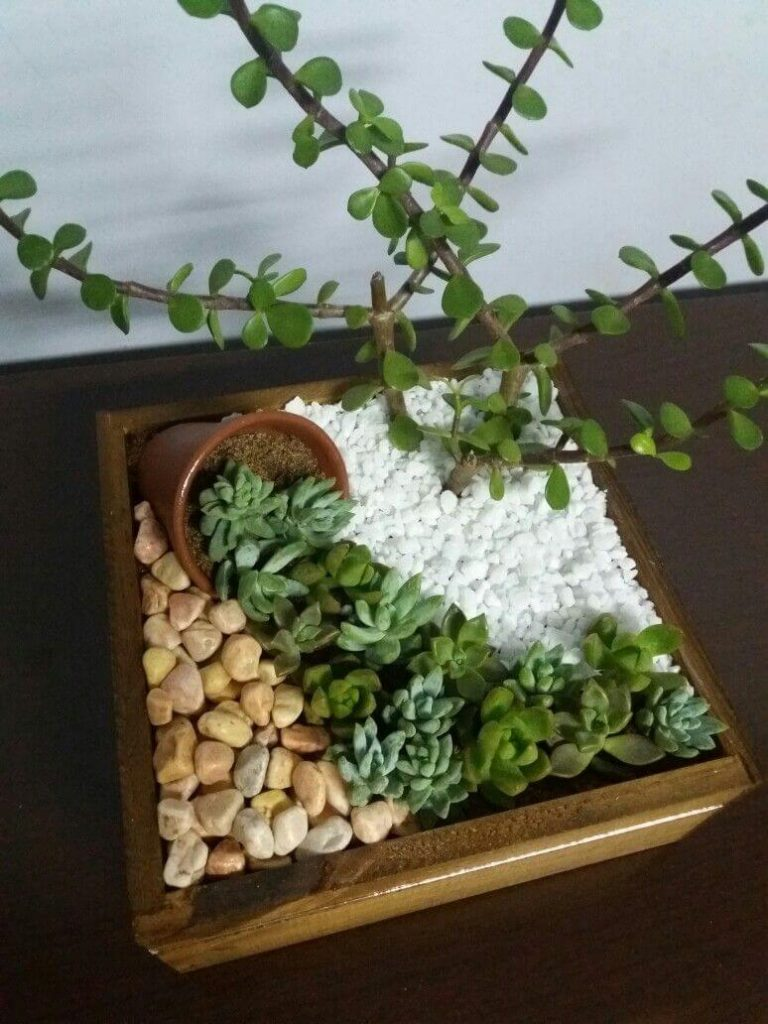 succulent garden ideas for small spaces