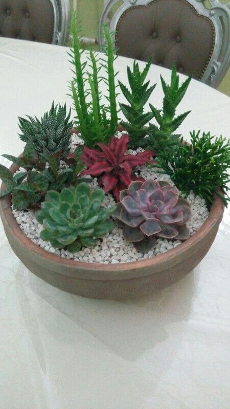 succulent garden ideas indoor