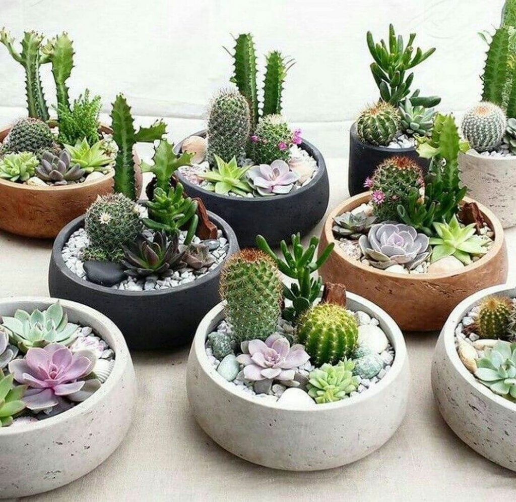 succulent garden pot ideas