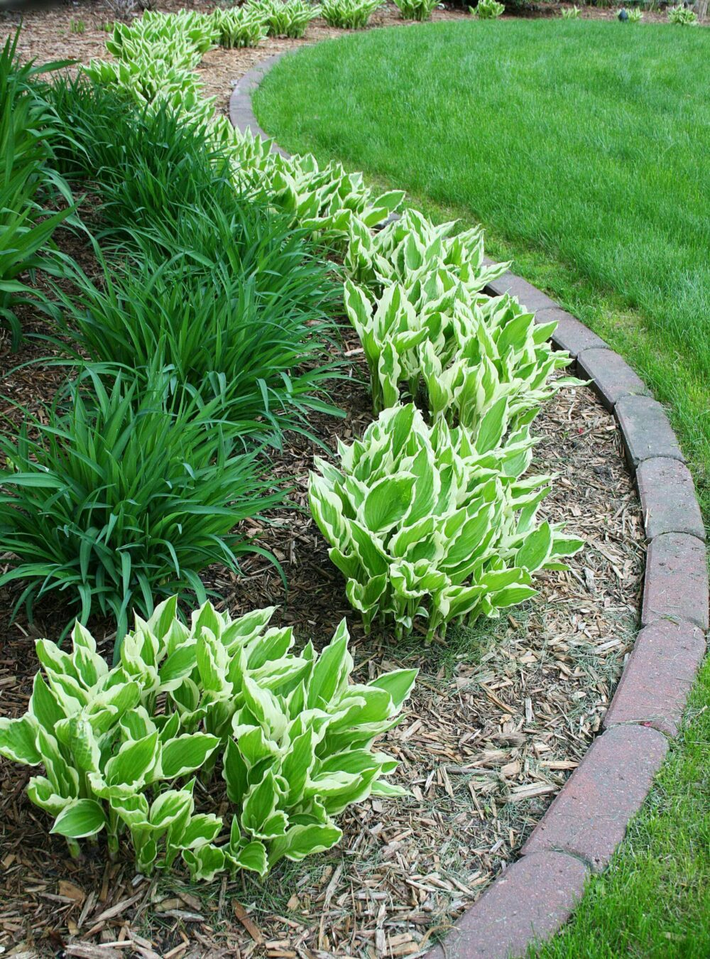 edging flower bed ideas