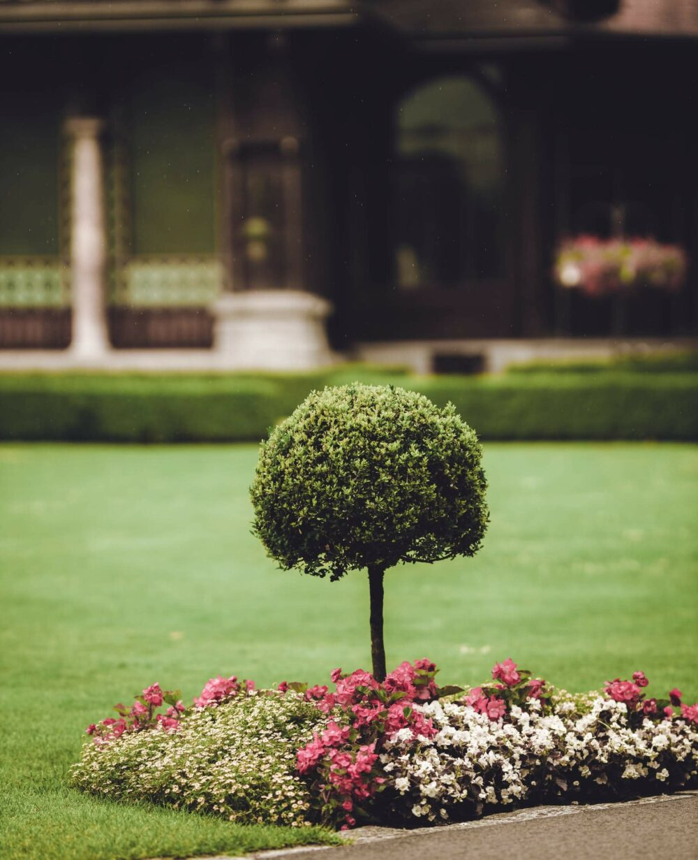 flower bed ideas around tree