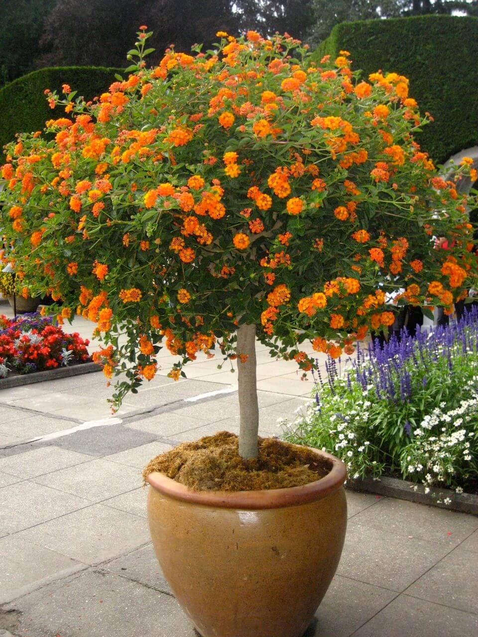 backyard flower pot ideas