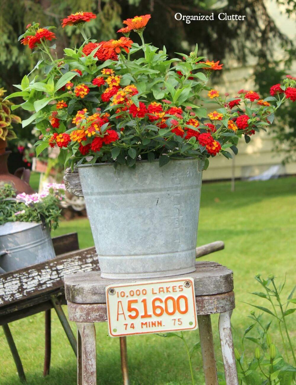 cheap flower pot ideas