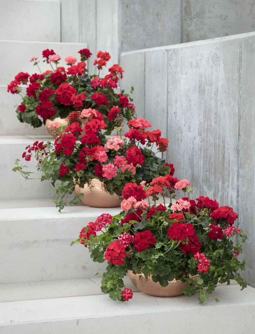 full sun flower pot ideas