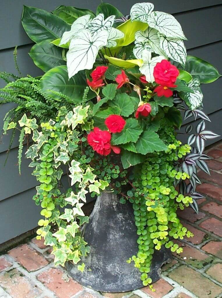 outdoor flower pot ideas pinterest
