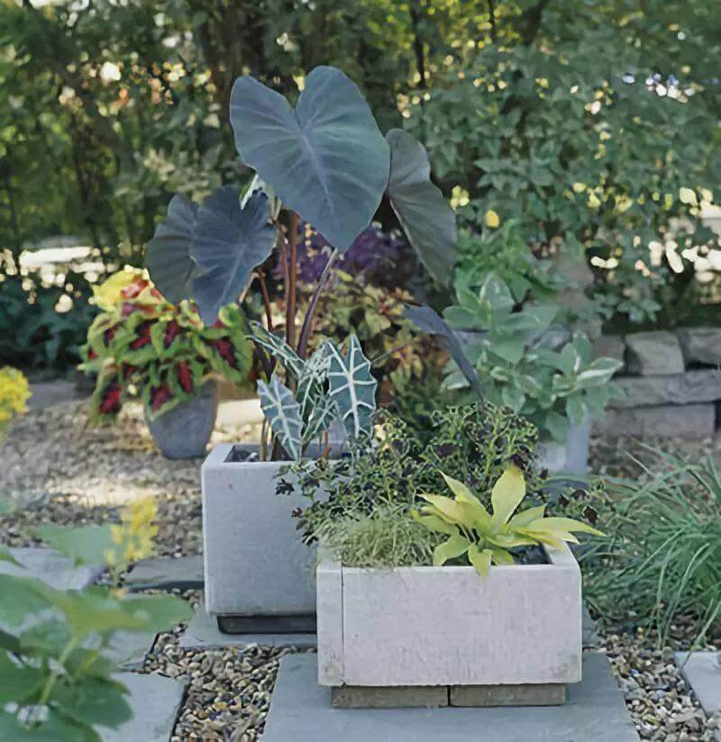 diy modern concrete planter