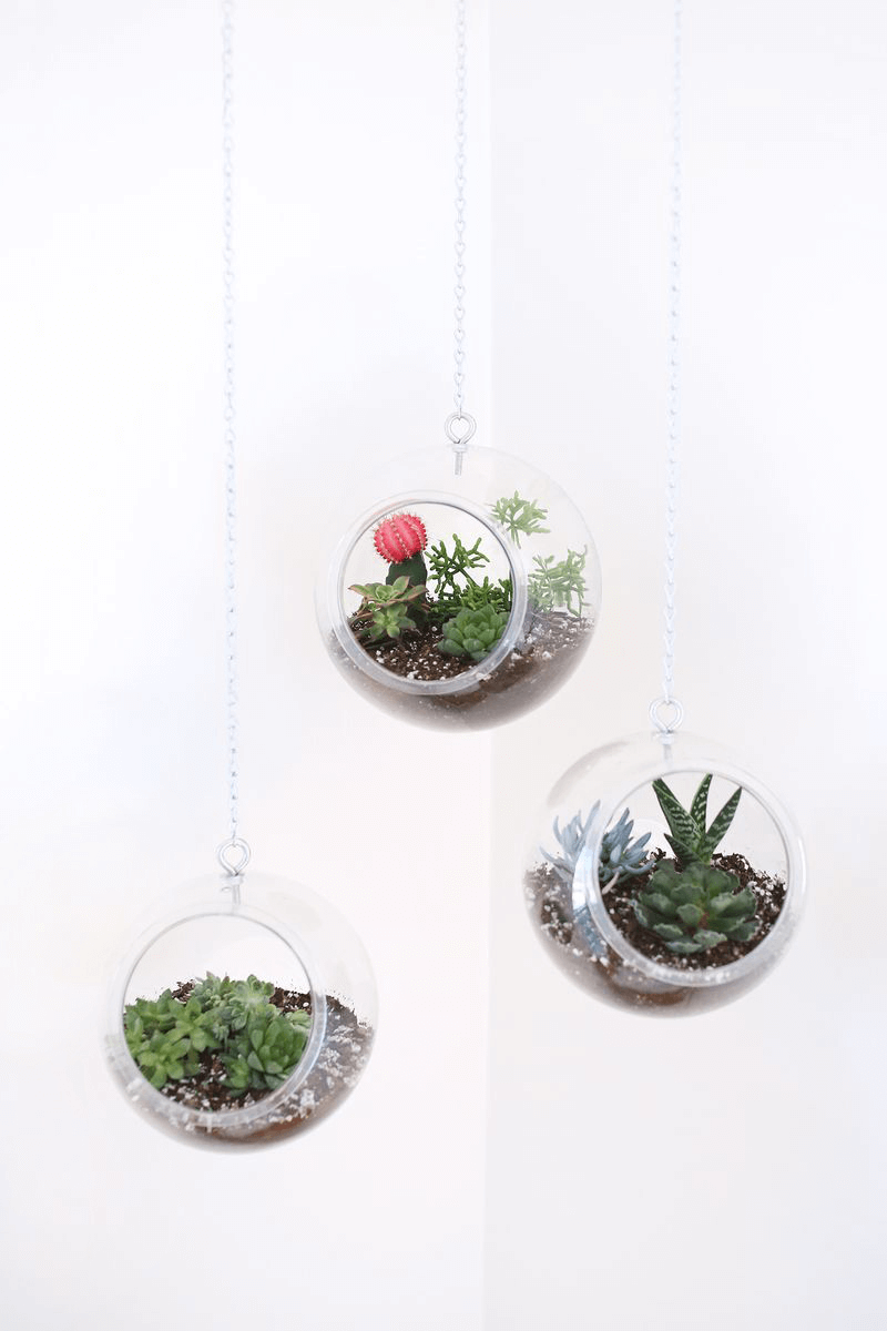 hanging fish bowl plants